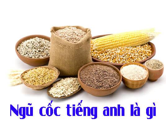 Hạt ngũ cốc tiếng Anh là gì