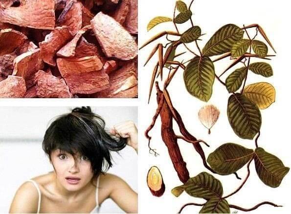 Trị tóc rụng và bạc sớm từ nguyên liệu thiên nhiên